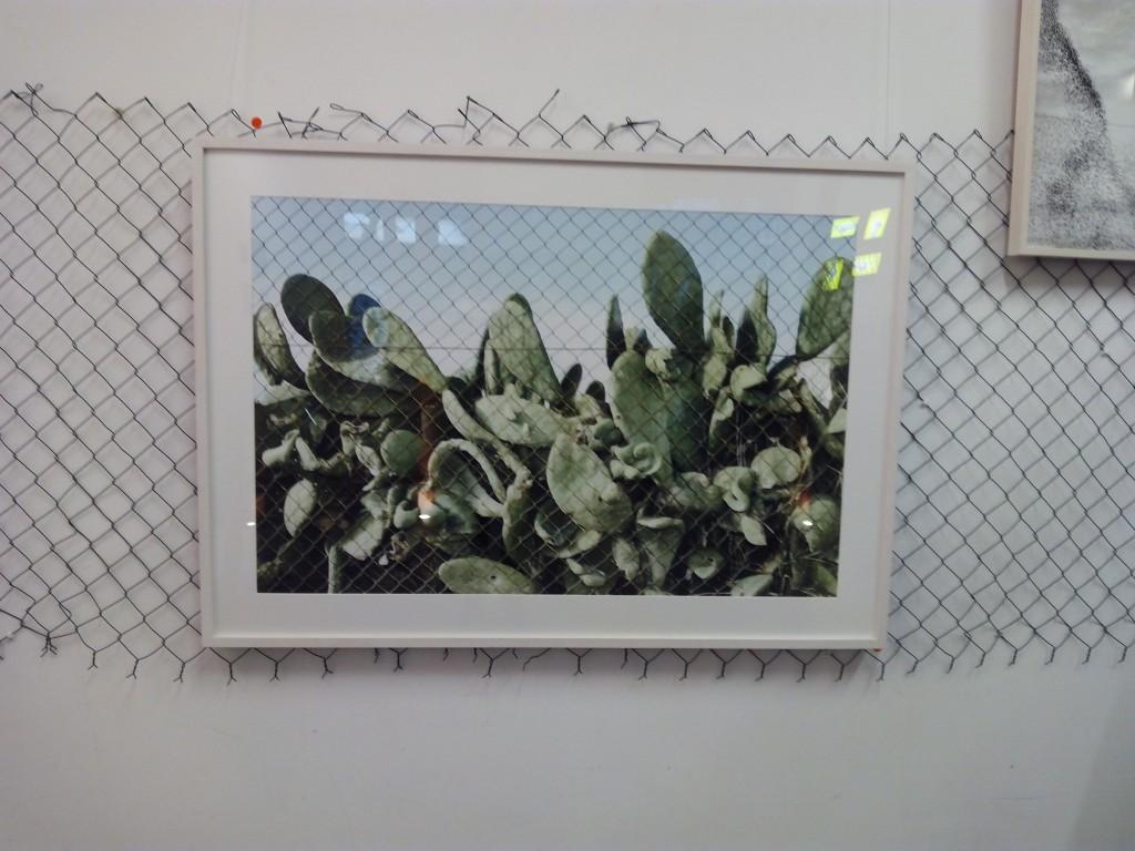 la valla fronteriza de Víctor G. Carreño en la que se enreda un cactus, mientras unos pájaros vuelan libremente sin rumbo hacia alguna parte