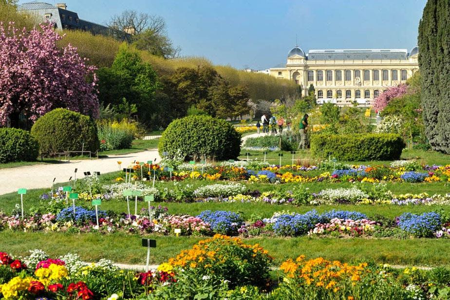 Jardín de plantas