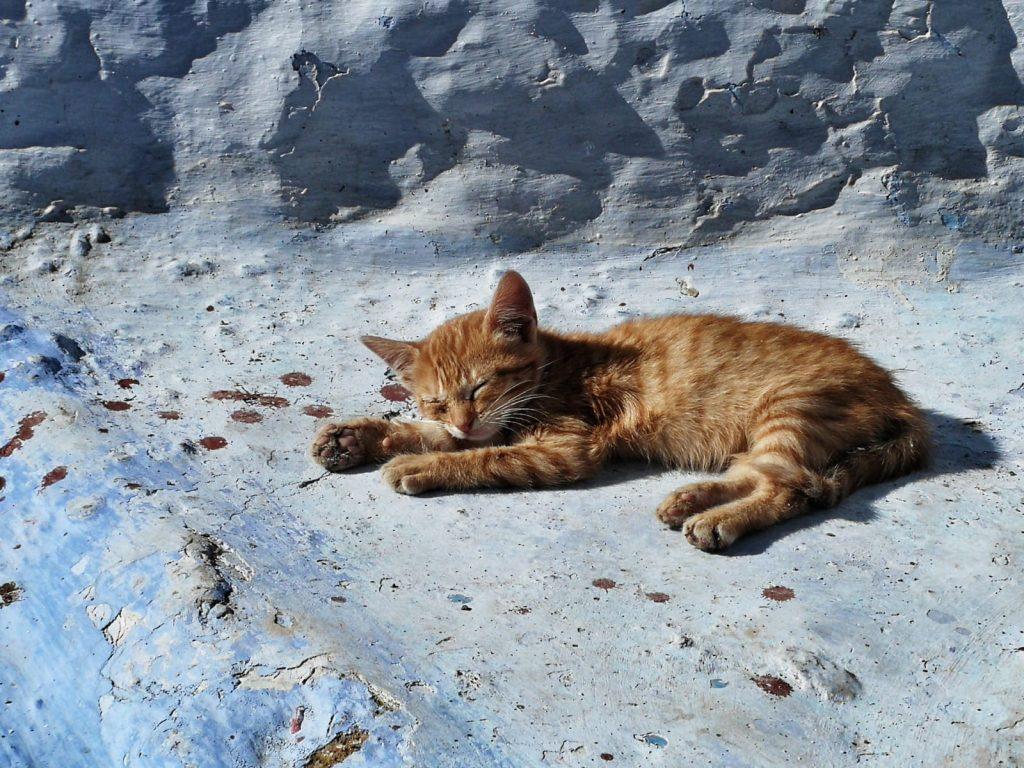 Gato durmiendo en Chauen
