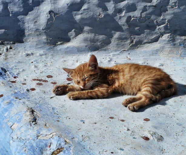 Gato durmiendo en Chaoen