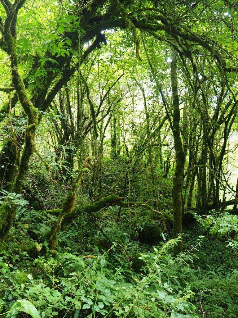 Bosque frondoso en Irati, Navarra